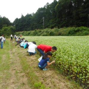 (募集終了しました。)そば畑散策・製粉工場見学・「信州ひすいそば」を使ったそば打ち体験!の参加者を募集します!